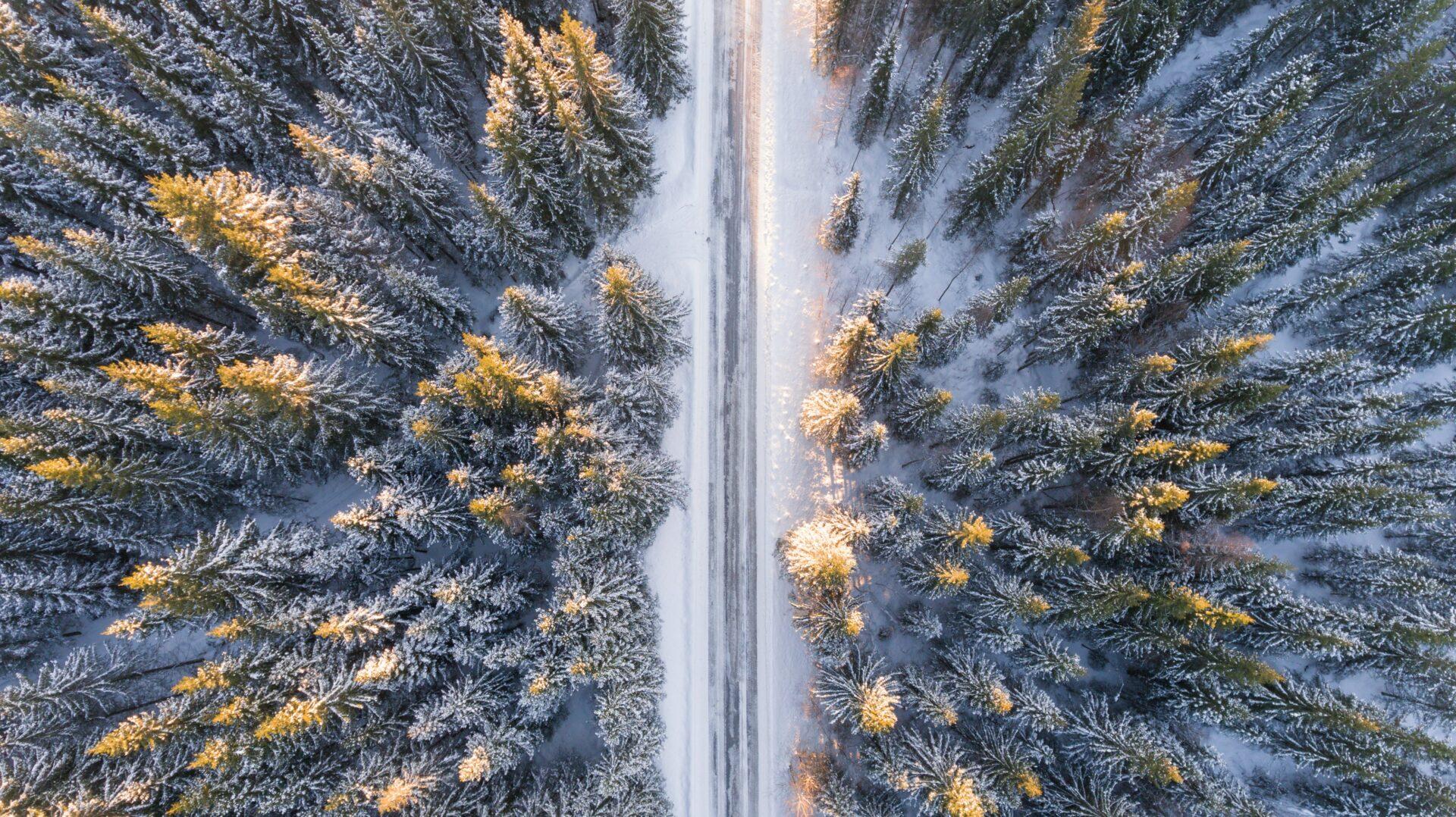 Flygbild av skog vintertid
