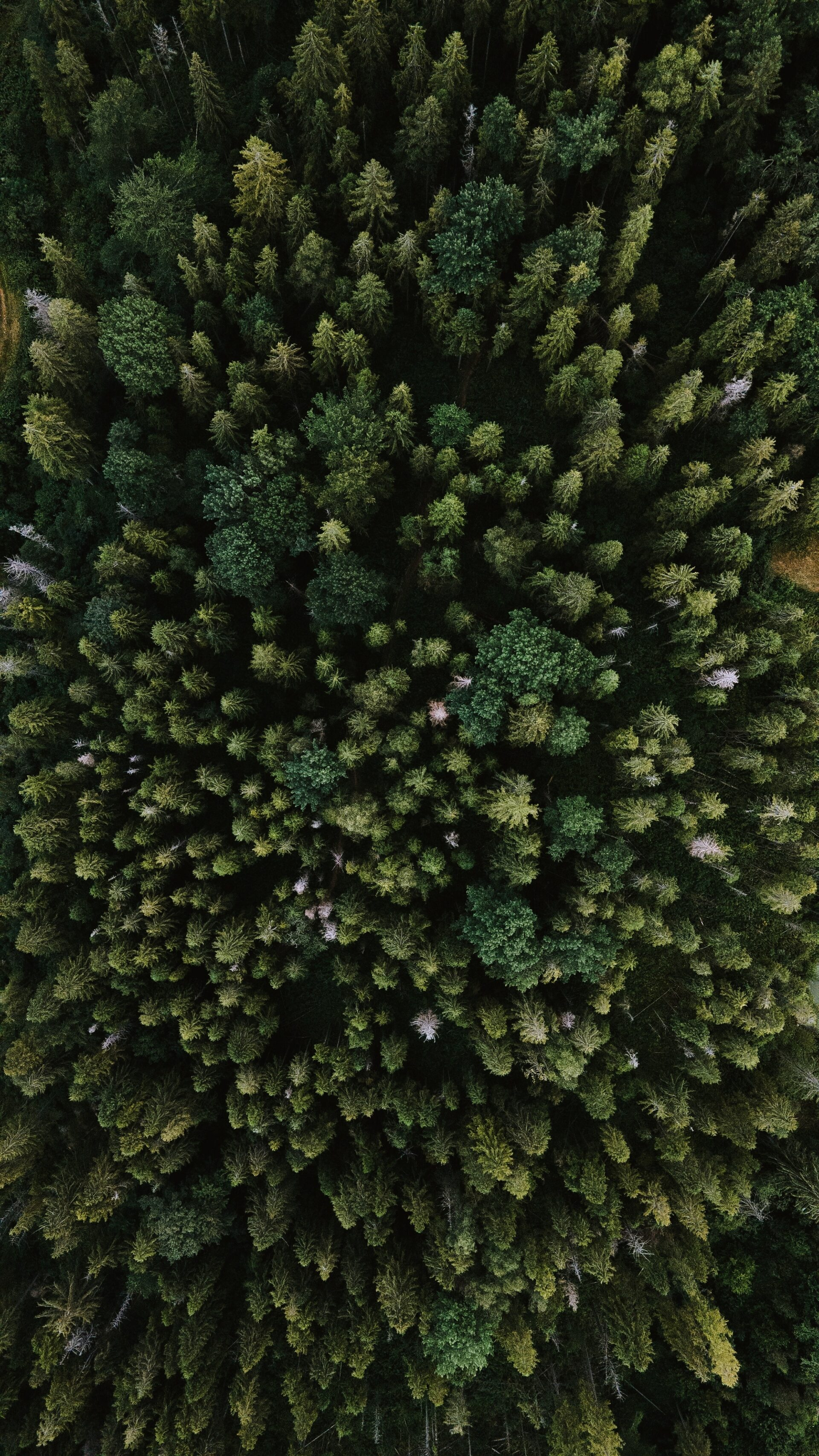 flygfoto av barrskog.