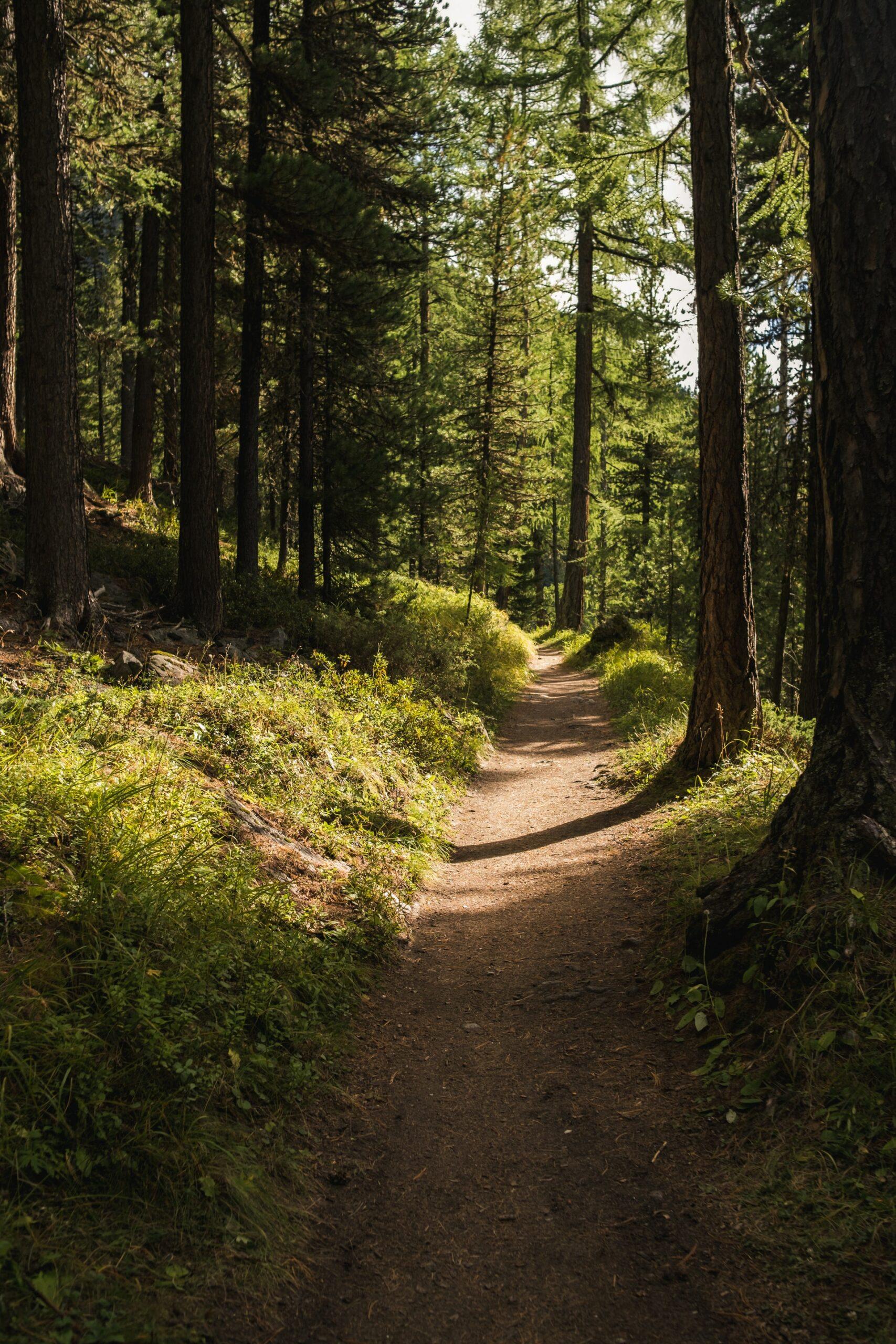 En stig i skogen.