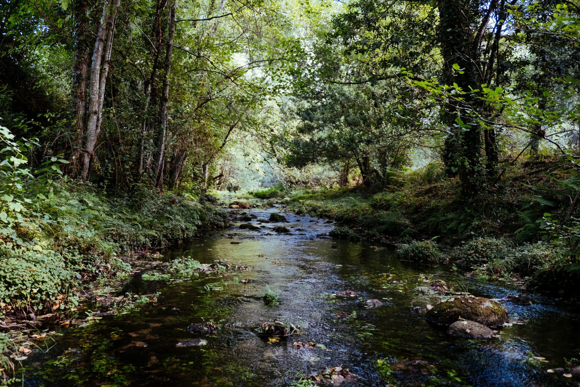 Ett vattendrag i skogen. Det är viktigt att rapportera farligt avfall till naturvårdsverket.